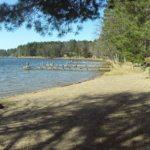 South Bay beach Lumberjack